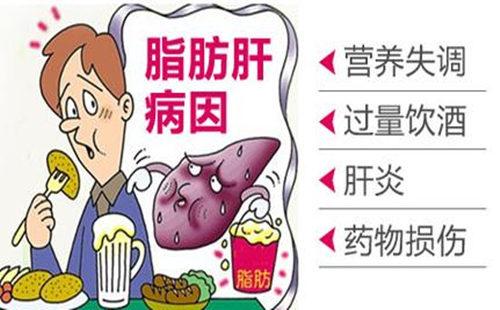 脂肪肝 (2).jpg