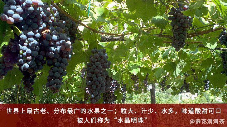 葡萄被称为水晶明珠