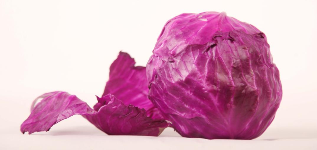 鲜艳华丽紫甘蓝,天然血管清洁工!